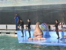 Отчёт о посещении Санкт-Петербургского Дельфинария